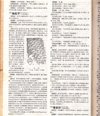 金沙藤(海金沙)